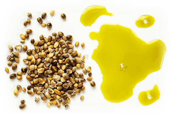 Soulsome Cold-Pressed CBD Oil and Seeds